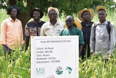 Dr Fousseyni Cissé (third from left) and his team of researchers visit a demonstration plot