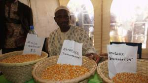 Diakaridia Ouattara with some sample of maize of his PHTC