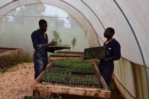 Daniel (L) and John working in the green house