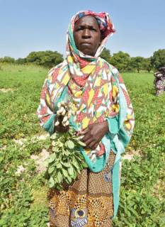 Kiné Sogoba stands in her groundnut field in Dacoumani, Mali