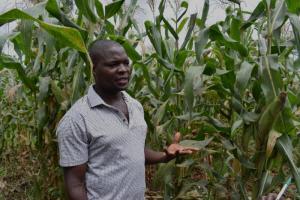 Steven in his maize field