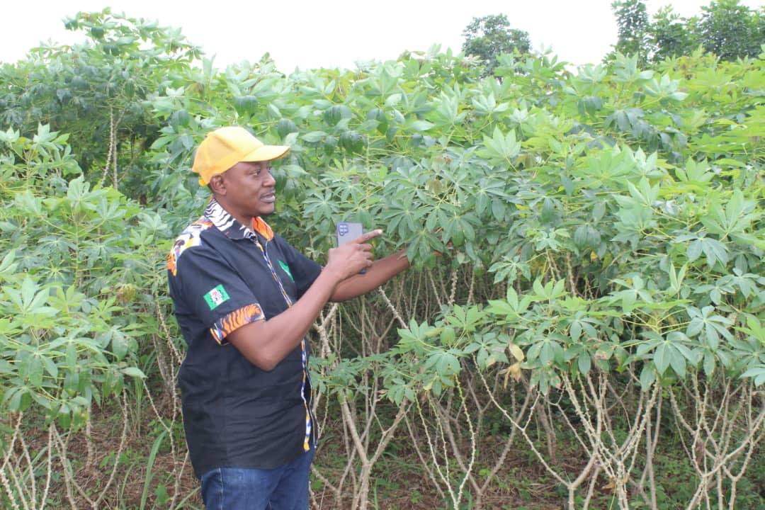 High Vitamin A Cassava CDP in Ogun State, Nigeria