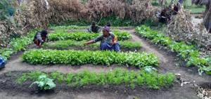 パーマガーデンを自宅に設置した女性農家(エチオピア オロミア州)